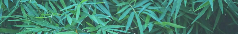 plants-backgroun.jpg